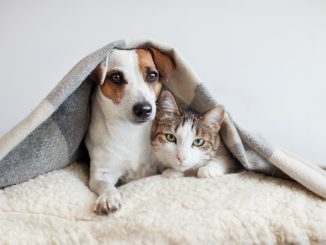 a cat and dog cuddling under a blanket